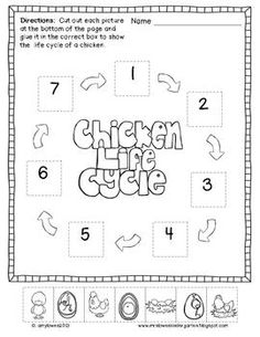 Chicken Life Cycle Science and Literacy Activities | Chicken life ...