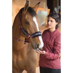 GROUPE 8 Equitation - Kit licol WINNER bordeaux FOUGANZA - Equipement cheval au repos