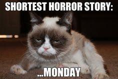 #quote #cat #horror #monday www.attitudeholland.nl