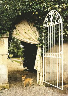 The Bradley Collection drape across gated stone wall w/ ivy