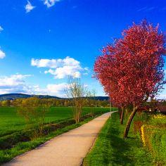 Colors of spring - Klagenfurt, Austria Klagenfurt, Regional, Austria, Sidewalk, Country Roads, Christian, Spring, Places, Colors