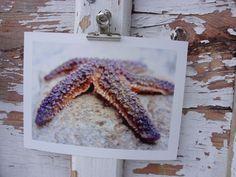 Seestern Bretagne, 2011  Abzug einer Originalfotografie, Format 13x18 mit weißem Rand