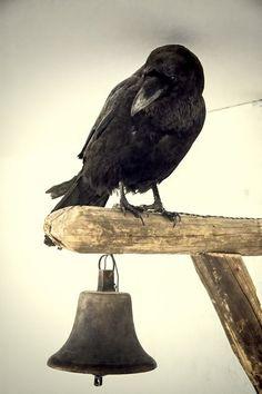 theblacknurse:  Icelandic Sorcery & Witchcraft