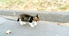 Adorable Kitten Takes A Walk With Her Dogs. I'm Gonna Faint! | The Animal Rescue Site Blog