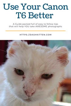 Take better cat photos with your canon with my helpful tips. Pet Photography Tips, Shutter Speed Photography, Photography Cheat Sheets, Photography Lessons, Photography Business, Beginner Photography, Animal Photography, Pet Parade, Photoshop Elements