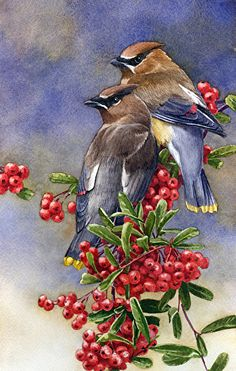 Cedar waxwings(Bombycilla cedrorum) by Joe Garcia. Waxwings descend on berry-laden trees and hedges, to flutter among the branches as they feast. These birds are sociable at all seasons, and it is rare to see just one waxwing. Watercolor Bird, Watercolor Animals, Watercolor Paintings, Watercolors, Pretty Birds, Beautiful Birds, Bird Illustration, Bird Drawings, Wildlife Art