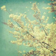 Flower Photograph Blossoms Spring Tree by EyePoetryPhotography, $30.00