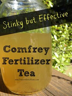 """Stinky But Effective – Comfrey Fertilizer Tea """"With three times the amount of potassium that is found in regular manure tea, it's hard to find a fertilizer that packs a bigger potassium punch. Compost Tea, Garden Compost, Organic Fertilizer, Organic Gardening, Garden Fertilizers, Vegetable Gardening, Organic Farming, Growing Herbs, Growing Vegetables"""