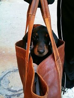 Mine would have shot out of that bag and been off chasing something and having an adventure. :D
