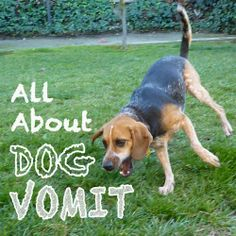 All About Dog Vomit - What to do if your dog is throwing up. #dog #vomit
