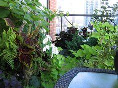 balcony gardens - Google Search