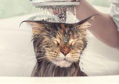14 Adorable Cat Photos