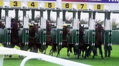 Racehorses in slow motion filmed at Beverley Racecourse. Produced by Equine Productions in 2013 Horse Racing Tips, Horses, Sony, Youtube, Board, Horse, Youtubers, Planks, Youtube Movies