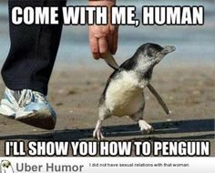 ...I'll show you how to penguin