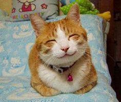 Chat qui sourit