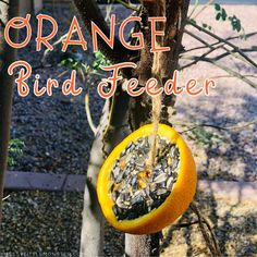 Make room for some outdoor fun with this easy homemade bird feeder! Kids will love making an orange bird feeder while they learn about birds.