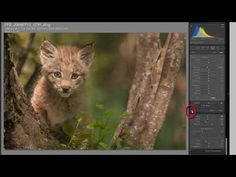 Processing an Image in Lightroom 5 – a Video Tutorial