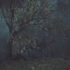 Moody Forest Photography - great gallery wall piece / Garmonique