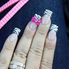 Zebra and bows