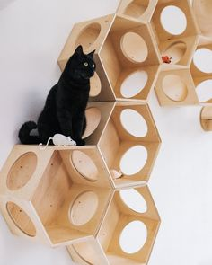 Cat house Cat Tree Cat tree furniture Cat shelf Cat bed modern Cat complex Cat furniture Cat furniture wall Cat hammock Cat hammock wall Cat House of hexagons Price is for one item hexagon Cat House Cat Wall Furniture, Modern Cat Furniture, Tree Furniture, House Furniture, Furniture Buyers, Cat Gifts, Cat Lover Gifts, Cat Lovers, Gatos Cat