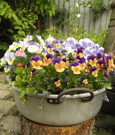 pansies.... I outside flower pots, potted pansies, idea, flower gardening in pots, planting flower pots, flowers potted, pansies container, flower pot garden, potted flowers & plants