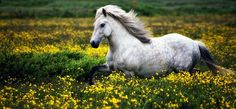 I wish you all a wonderful Sunday with this Icelandic horse :-)