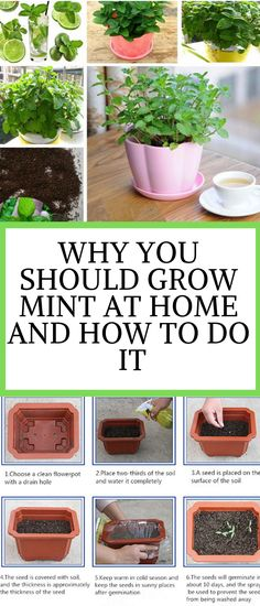 Vegetable garden planner - Why You Should Grow Mint At Home – Vegetable garden planner Organic Gardening, Gardening Tips, Urban Gardening, Indoor Gardening, Sustainable Gardening, Gardening Courses, Gardening Supplies, Mint Garden, Growing Mint