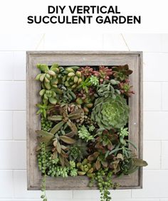 Pin it for later!   Turn Plants Into Art With This DIY Vertical Garden