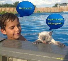 Percy Jackson Memes, Lego Ninjago, Laughing So Hard, Haha, Have Fun, Weird, Funny Pictures, Cute Animals, Jokes