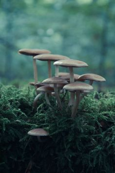 foraging for mushrooms, though these ones look suspect, al