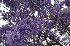 A tree in full bloom