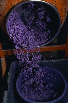 ♡lavanda - Lavender for Marseille Soap Lavender Green, Lavender Fields, Lavender Flowers, Lavander, Lavender Soap, Purple Flowers, Lavenders Blue Dilly Dilly, Malva, All Things Purple