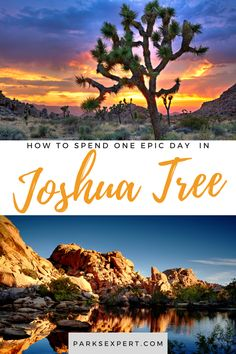 If you only have one day in Joshua Tree, but still want to see it all, here's our list of must-see attractions that will help you plan a Joshua Tree day trip. Usa Travel, Travel Tips, Travel Destinations, Joshua Tree National Park, National Parks, Great Places, Places To Go, Tree Day, Visit Usa
