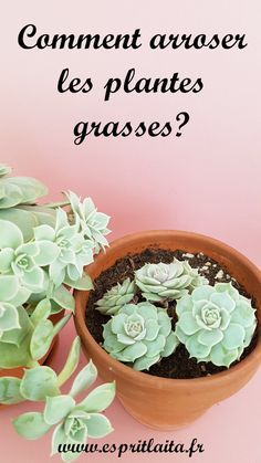succulents in water growing \ succulents in water succulents in water growing succulents in water bottle succulents in water fountain succulents in watering can succulents in water beads How To Water Succulents, Growing Succulents, Growing Roses, Planting Flowers, Fake Plants Decor, Hanging Plants, Garden Planters, Herb Garden, Garden Art
