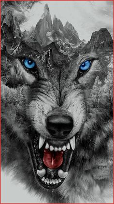 Traditional wolf tattoo design is part of American Traditional Wolf Tattoo Ideas - wolf growling Snarling Wolf Large Closeup Bares Fangs Image From Tinypic Com Tags