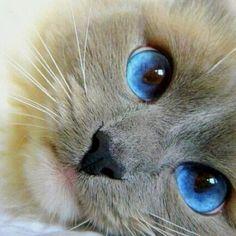 Pretty Kitty!!