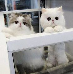 Dozens of Cute Cats and Kittens Cute Kittens, Cats And Kittens, Ragdoll Kittens, Tabby Cats, Bengal Cats, Pretty Cats, Beautiful Cats, Animals Beautiful, Beautiful Pictures
