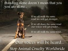Stop animal cruelty worldwide.