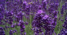 Insetti nell'orto e in giardino: piante repellenti più efficaci