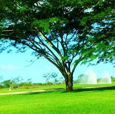 corotú @ Buenaventura Golf Club byanilupty2