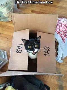 A box!! For me?? Mine??