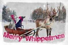 The finished whippet Xmas card