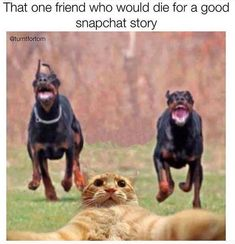 The year of the perfect snap: | 28 Memes That Pretty Much Sum Up Life In 2015