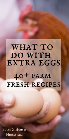 Shade Garden Flowers And Decor Ideas 40 Farm Fresh Egg Recipes. How to manage Extra Eggs When Youre In Overabundance. Thoughts And Recipes For Using Up Eggs. Numerous Ways To Preserve Fresh Eggs. Egg Recipes For Dinner, Healthy Egg Recipes, Recipes For Eggs, Healthy Food, Tuna Recipes, Noodle Recipes, Pizza Recipes, Free Recipes, Vegan Recipes