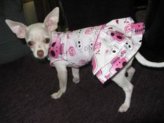 Skull Dog Harness with Skirt PLUS Matching Collar by CharteChic, $22.00