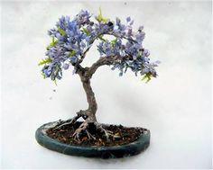 Jacarandá-mimoso (Jacaranda mimosifolia).