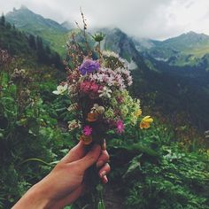 by @zhannakruk - Collecting #wildflowers