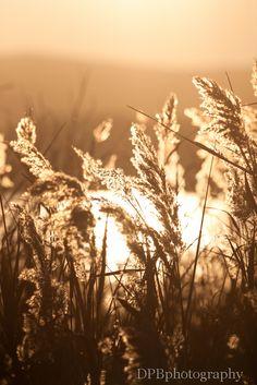 reed at water