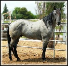 HUMMER HANCOCK HAYES - BAILEY'S PERFORMANCE HORSES, Orland CA