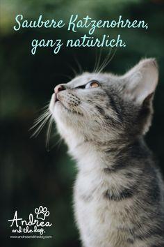 """Unser """"Ohrenfrei"""" dient zur regelmäßigen, sanften Reinigung der Ohren deiner Katze.   Pflegt mit der Kraft von Aloe Vera, Rose, Lavendel und Kamille.  #katzenliebe #andreaandthedog #katzenpflege #naturprodukte #chemiefrei #handmade #steiermark #naturproduktefürkatzen #naturpur #forcats #catlove #ohrenfrei My Mouth, Scripture Verses, Cats, Aloe Vera, Inspirational Quotes, Animals, Dog, Pet Dogs, Lavender"""